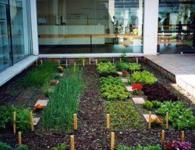 Un huerto en tu casa - Como tener un jardin en casa ...