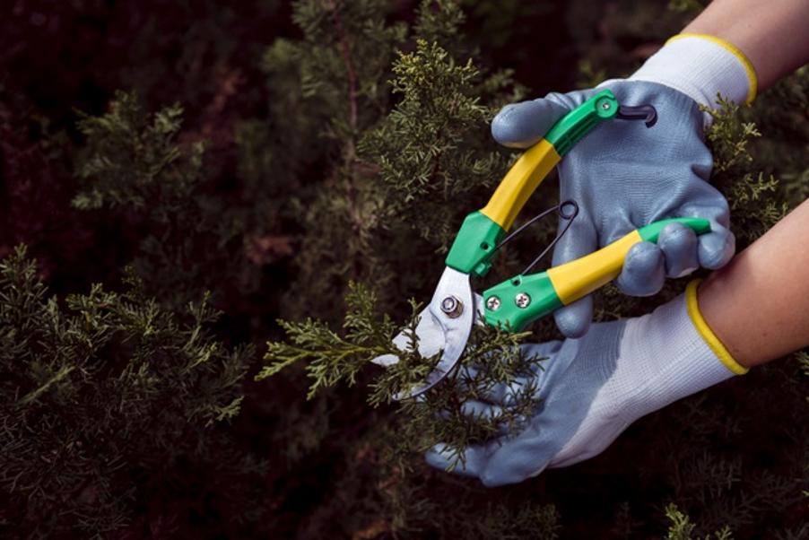 7 claves para ser un buen jardinero