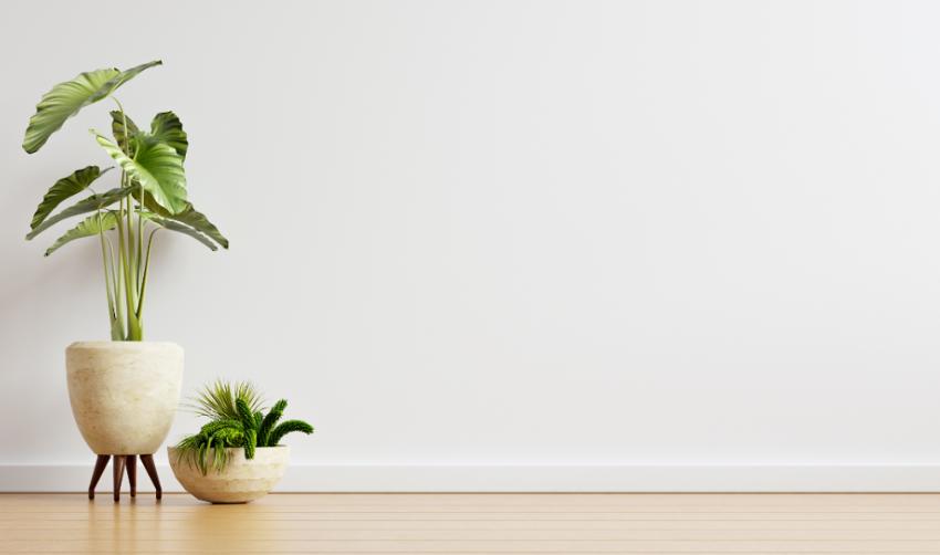 Cómo elegir las mejores plantas para decorar tu hogar