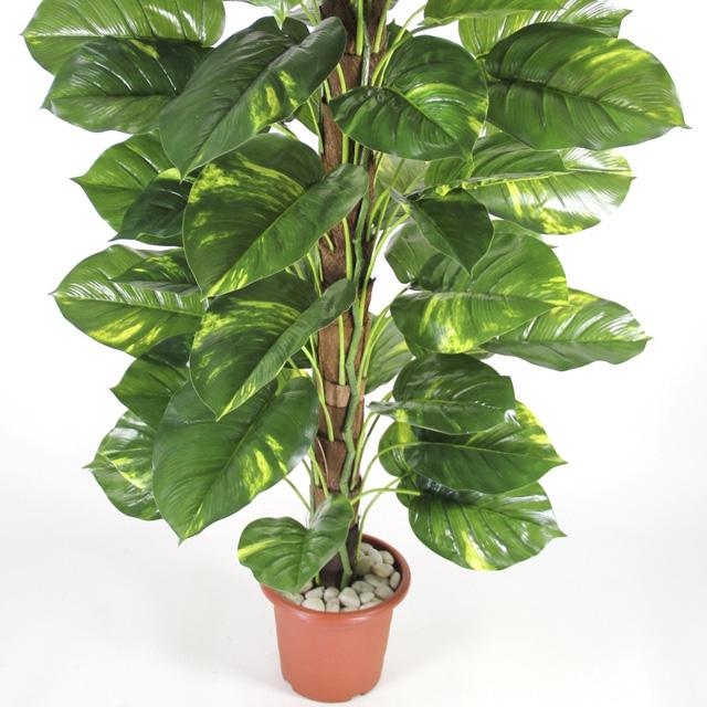 El poto una planta de interior que decora for Plantas verdes de interior