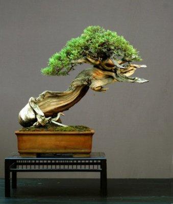 El cuidado del bonsi - Cuidado del bonsai ...