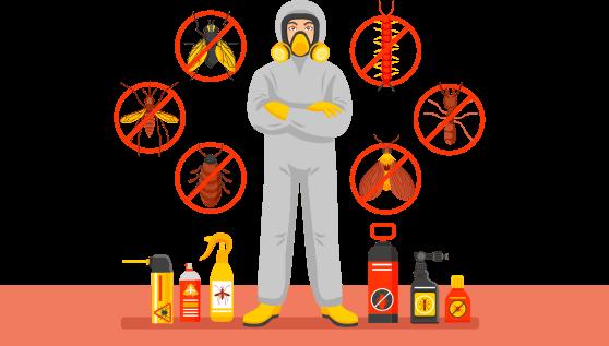 Guía para elegir servicios de fumigación de plagas Madrid