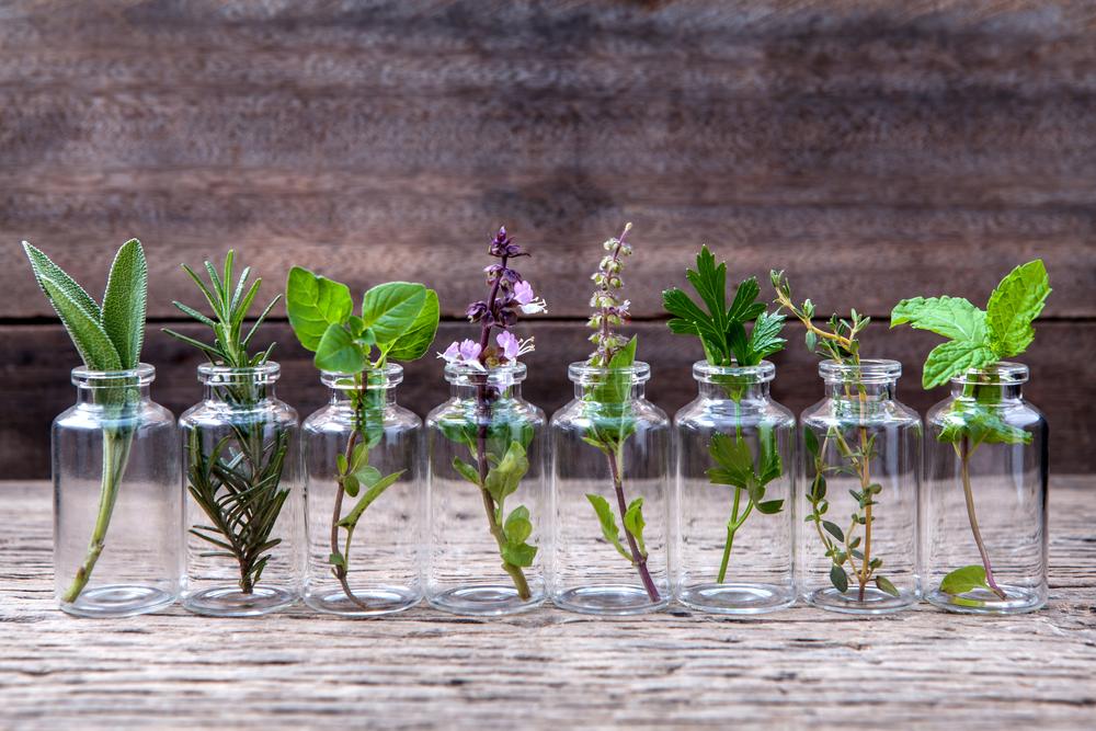 Cultivar vegetales y hierbas aromáticas de manera sencilla