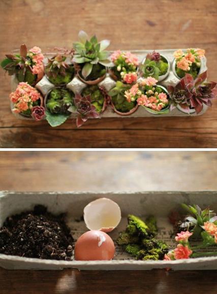 Mini jardn en cscaras de huevo for Como hacer un jardin pequeno